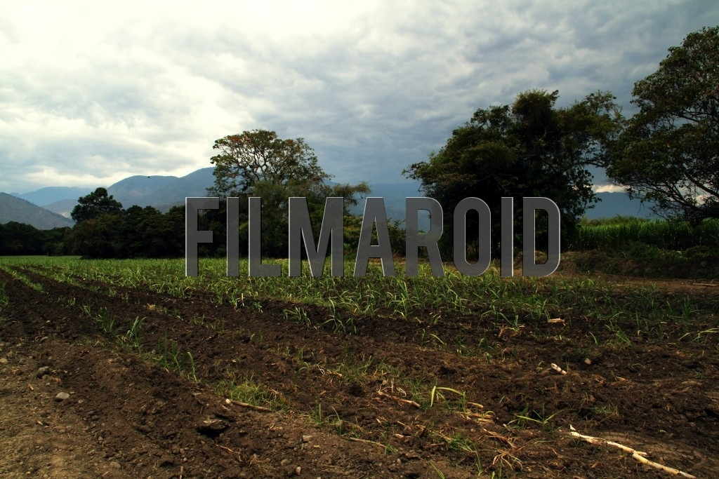 Plantation field landscape in the region of Valle del Cauca in Colombia