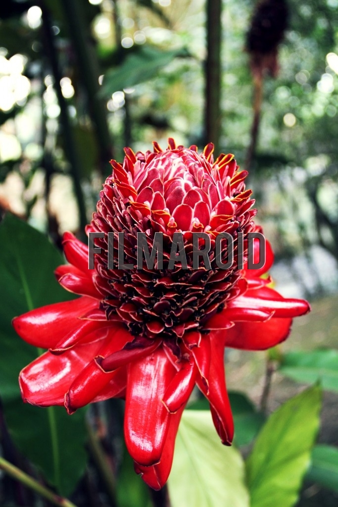 An exotic Colombian flower with large and small red petals