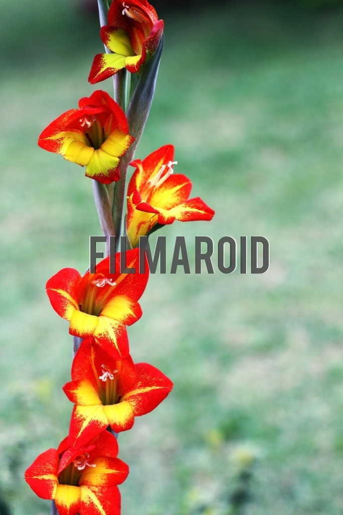A group of bright red and yellow exotic flowers decorating stem and garden as background