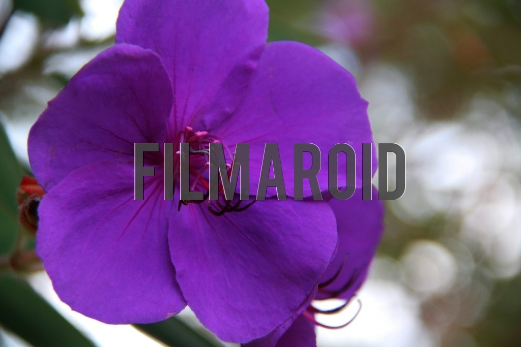 An exotic flower with purple petals and a small wasp pollinating it