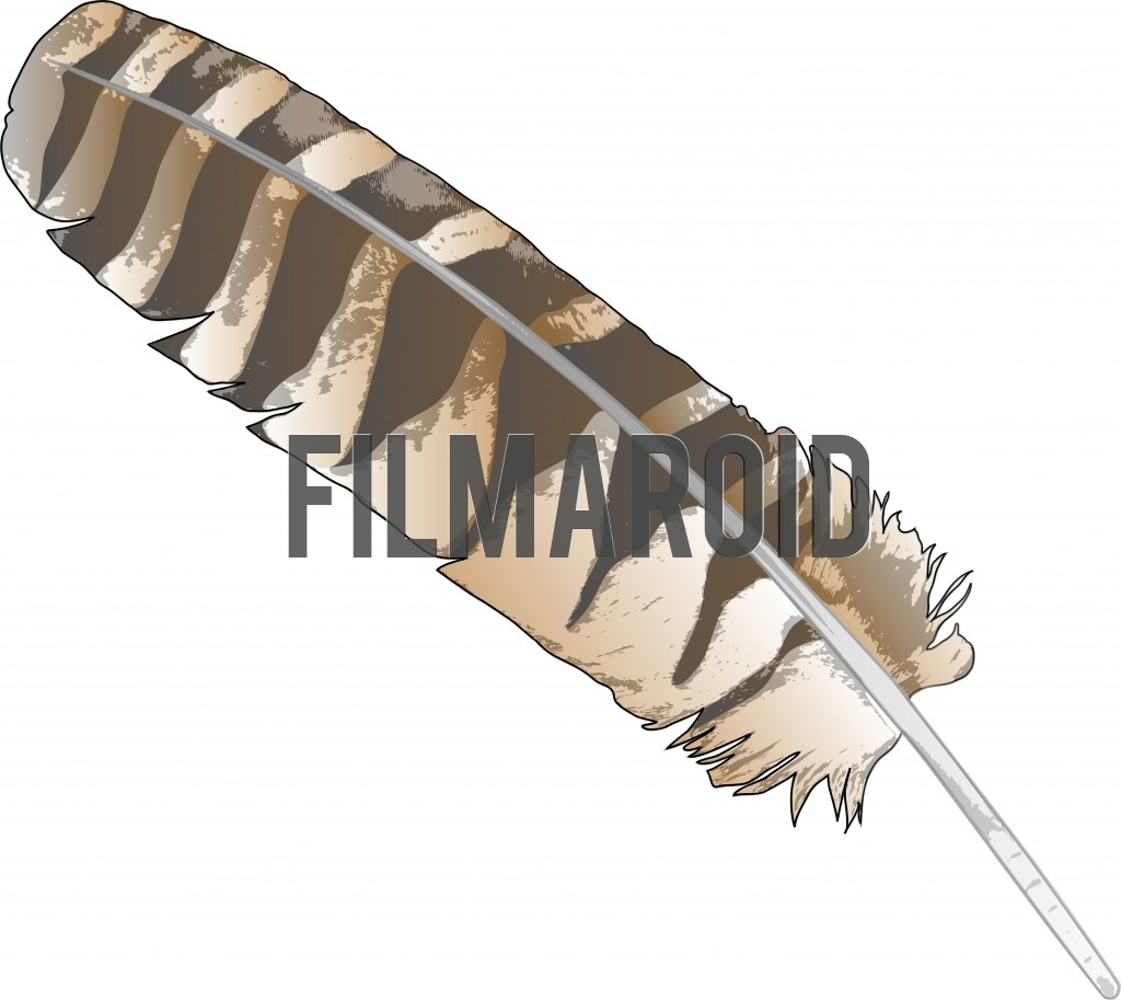 Beautiful brown striped hawk or eagle feather vector illustration with grunge or pop up style texture and details