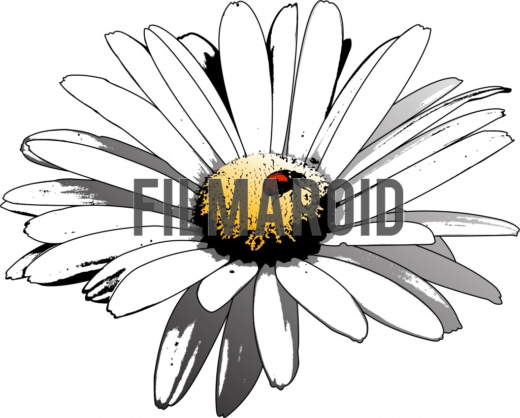 Beautiful isolated and realistic white blooming daisy flower with textures and shadows and a ladybug resting on the center in grunge style