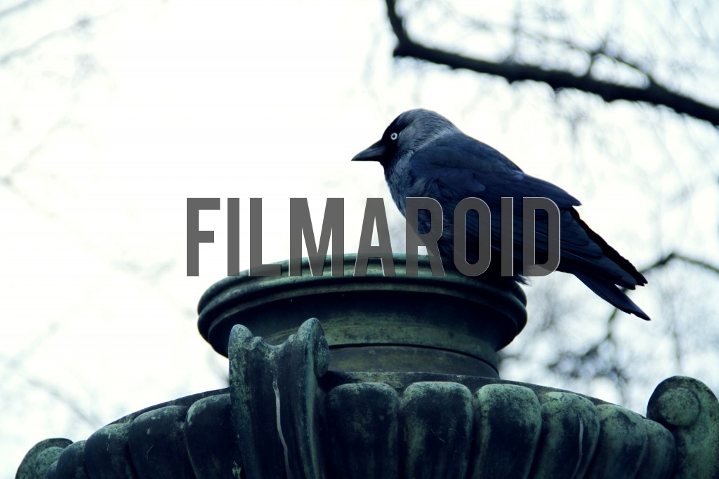 A beautiful black bird rests on the top of an art nouveau park lamp during one winter afternoon