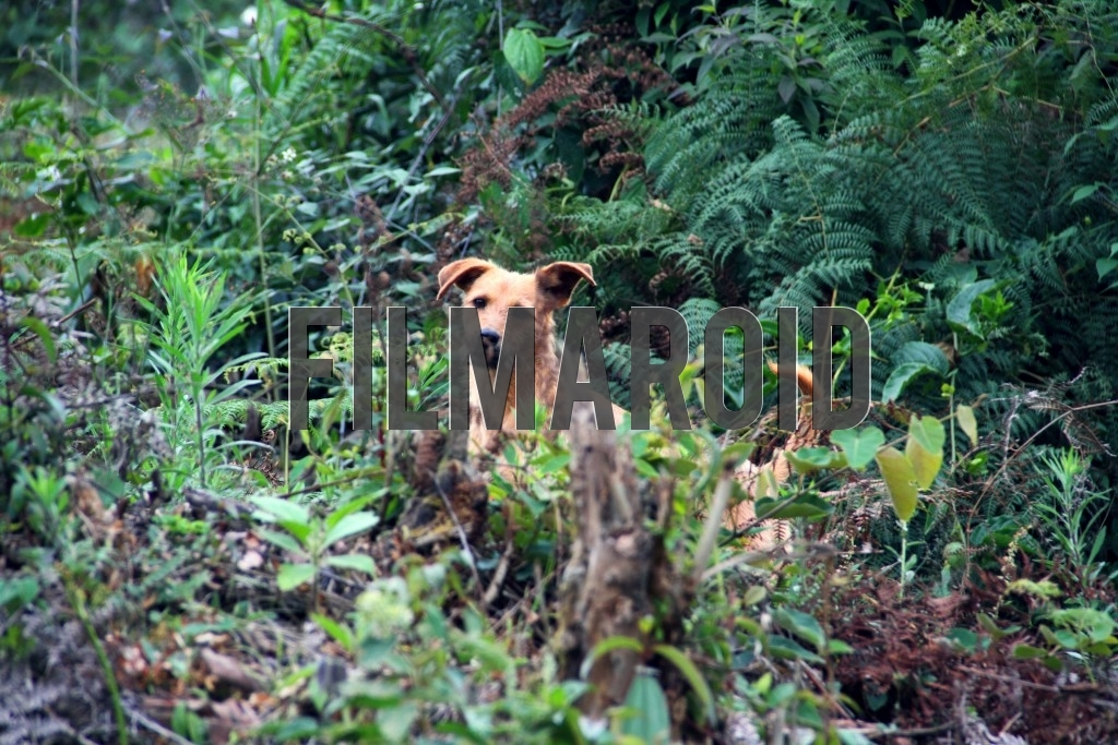 A wild dog hiding behind branches and other vegetation