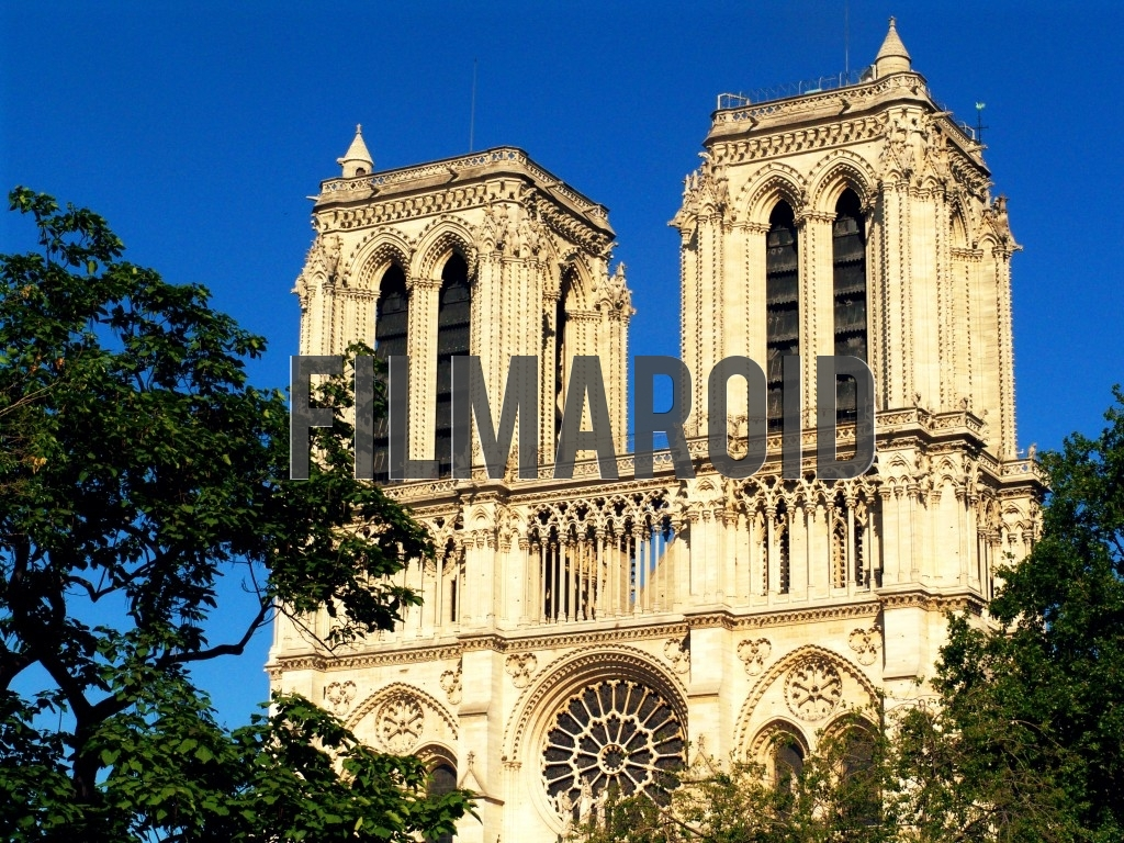 Side view of the Cathedral of Notre Dame de Paris framed by some trees during one summer afternoon