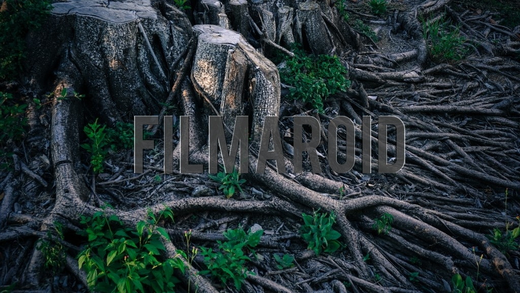 Detail view of roots from a large dead tree