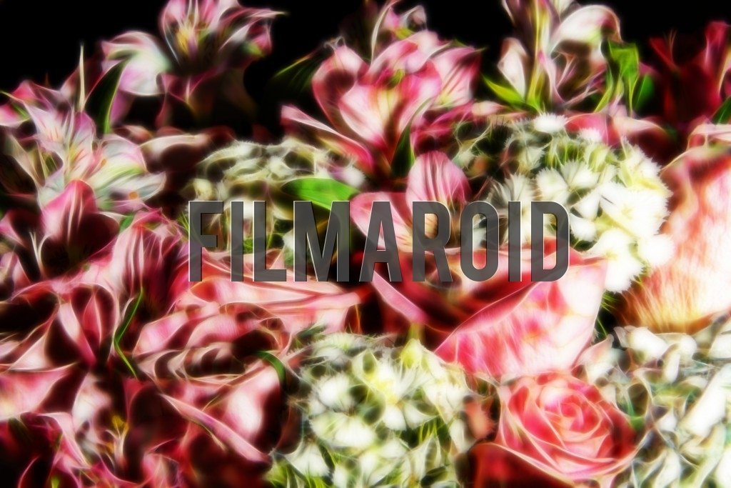 A group of fresh beautiful and exotic flowers carefully arranged with a dreamy look against a black background