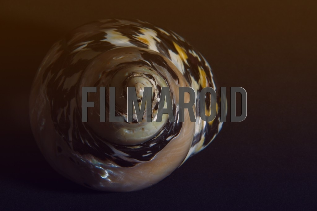 Beautiful shiny and colorful seashell with interesting texture and patterns isolated against dark background