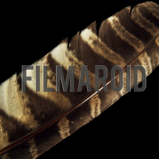 Closeup of large hawk feather black background - A collection of stock photos about the Odd and Bizarre