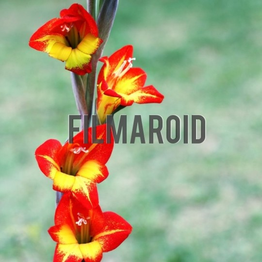Bright red yellow exotic flowers - A collection of stock photos about beautiful and exotic Flowers