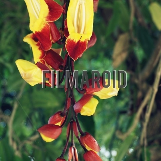 Exotic yellow red flowers - A collection of stock photos about beautiful and exotic Flowers