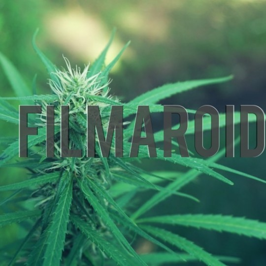 Marijuana bud - A collection of stock photos about beautiful and exotic Flowers