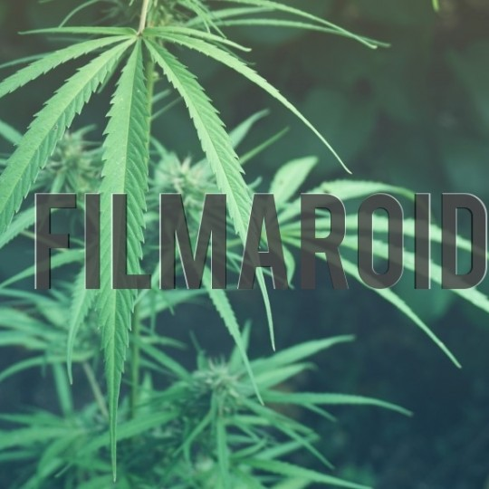 Marijuana leaf - A collection of stock photos about beautiful and exotic Flowers