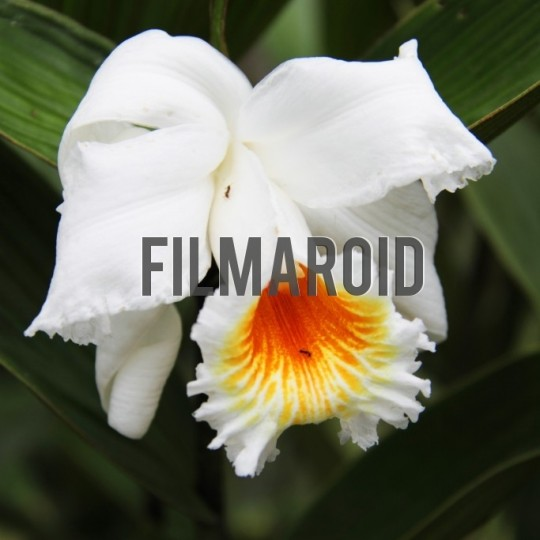White orchid with ants - A collection of stock photos about beautiful and exotic Flowers