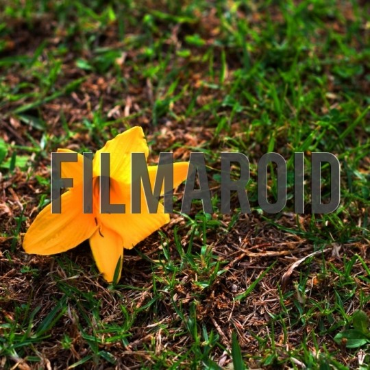 Yellow lily on grass - A collection of stock photos about beautiful and exotic Flowers
