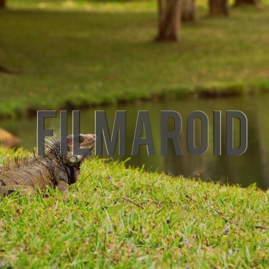 Adult iguana resting by a lake - A collection of stock photos about Animals