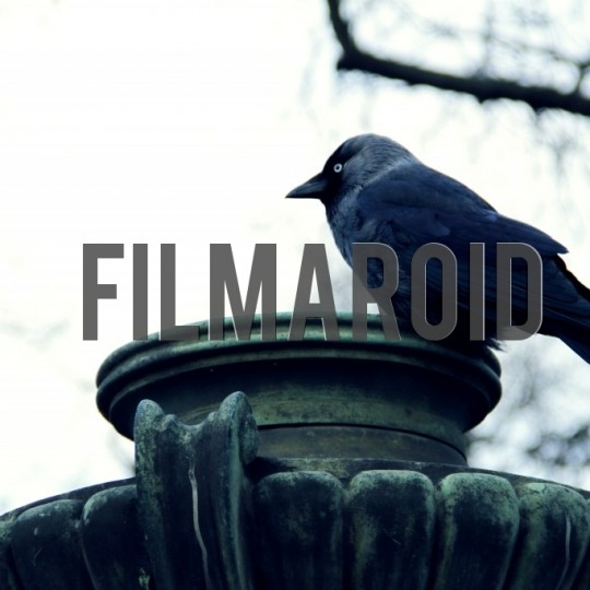 Black bird standing on park lamp - A collection of stock photos about Animals