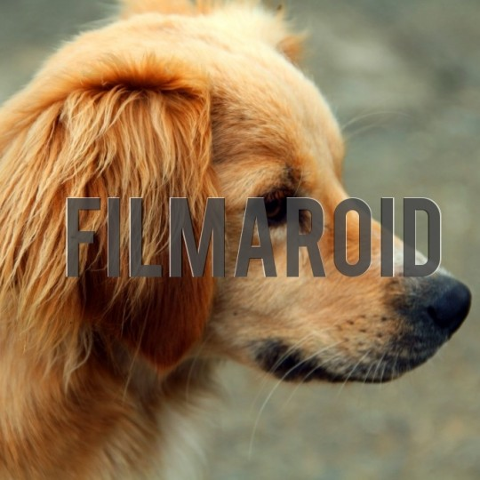 Blonde dog profile - A collection of stock photos about Animals