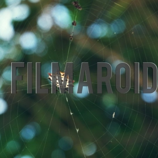 Exotic spotted spider in web - A collection of stock photos about Animals
