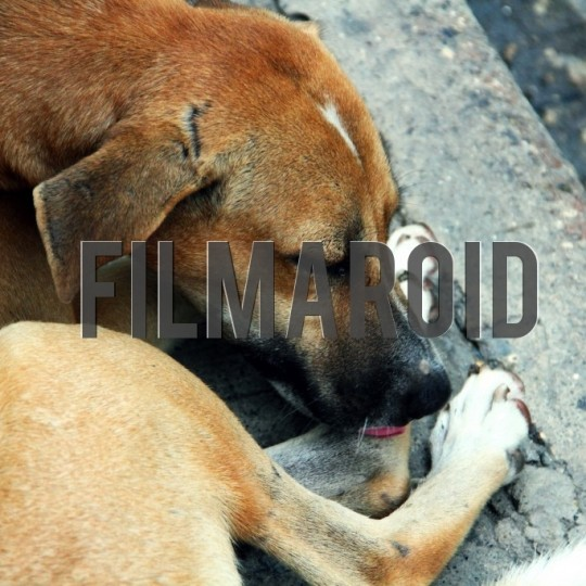 Street dog resting licking paws - A collection of stock photos about Animals