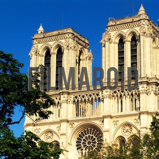 Notre dame de paris trees - A collection of stock photos from the City of Light and Love - Paris