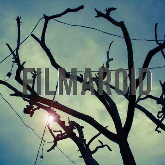 Tree branches background - A collection of stock photos with diverse backgrounds