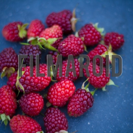 Wild blackberries - A collection of stock photos with diverse backgrounds