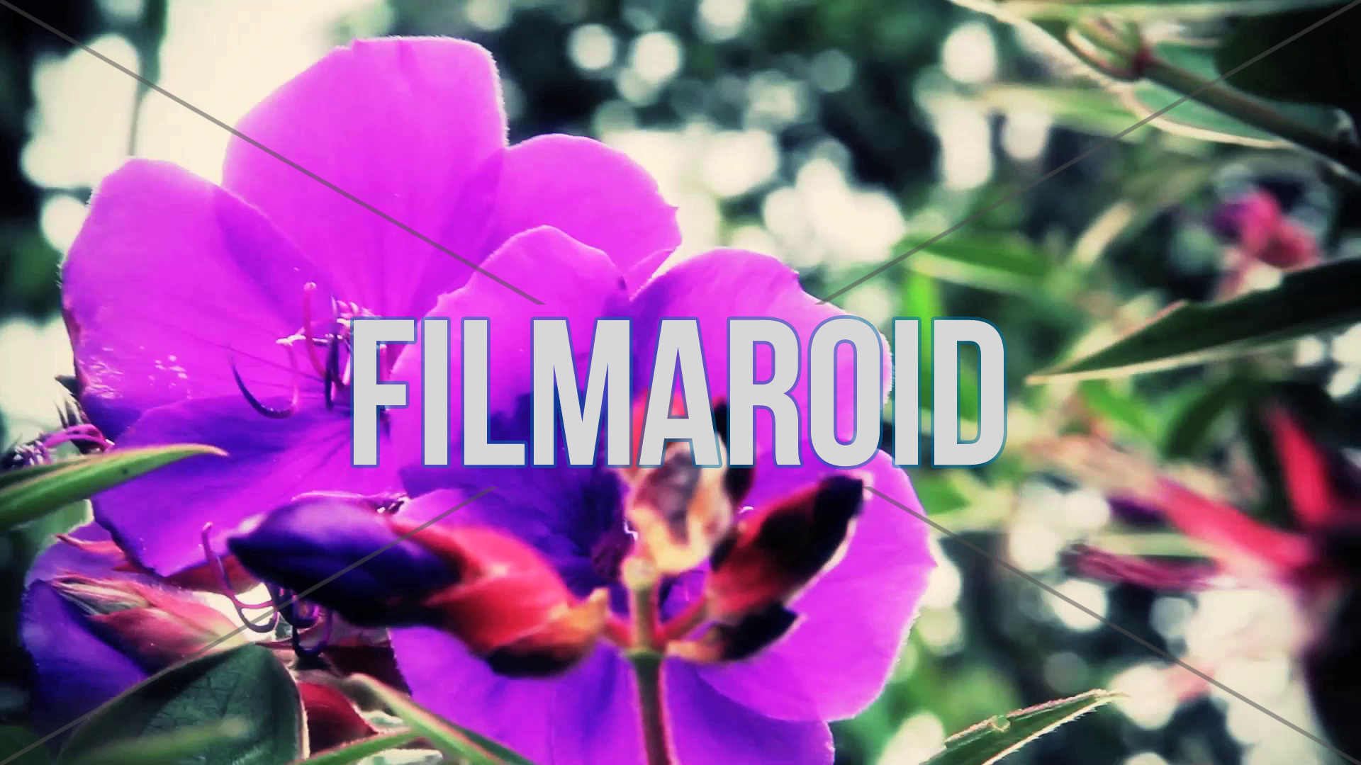 Purple exotic flowers moving with wind - A collection of stock footage about Nature