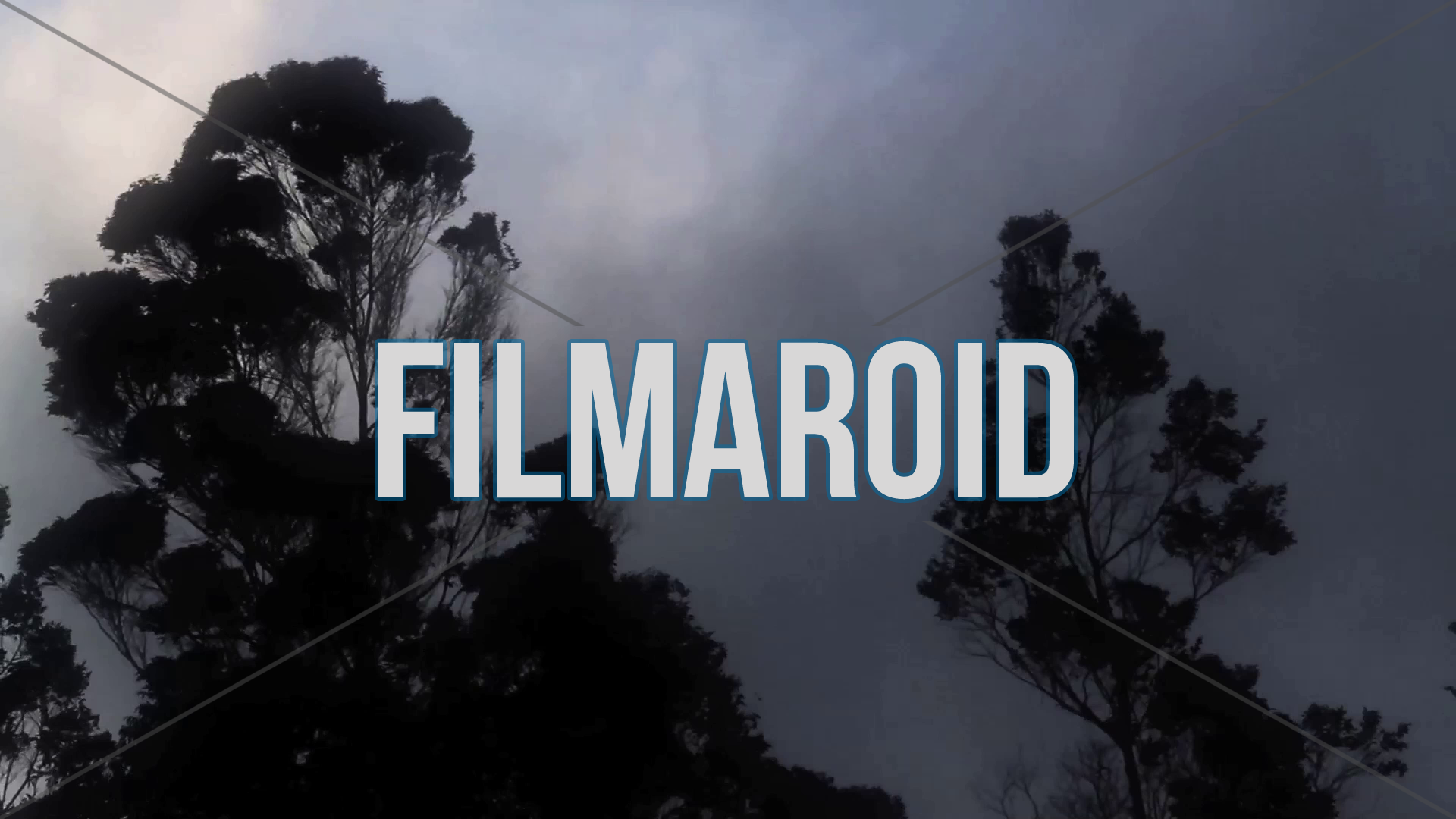 Eucalyptus trees moving with wind and fog - A collection of stock footage about Nature