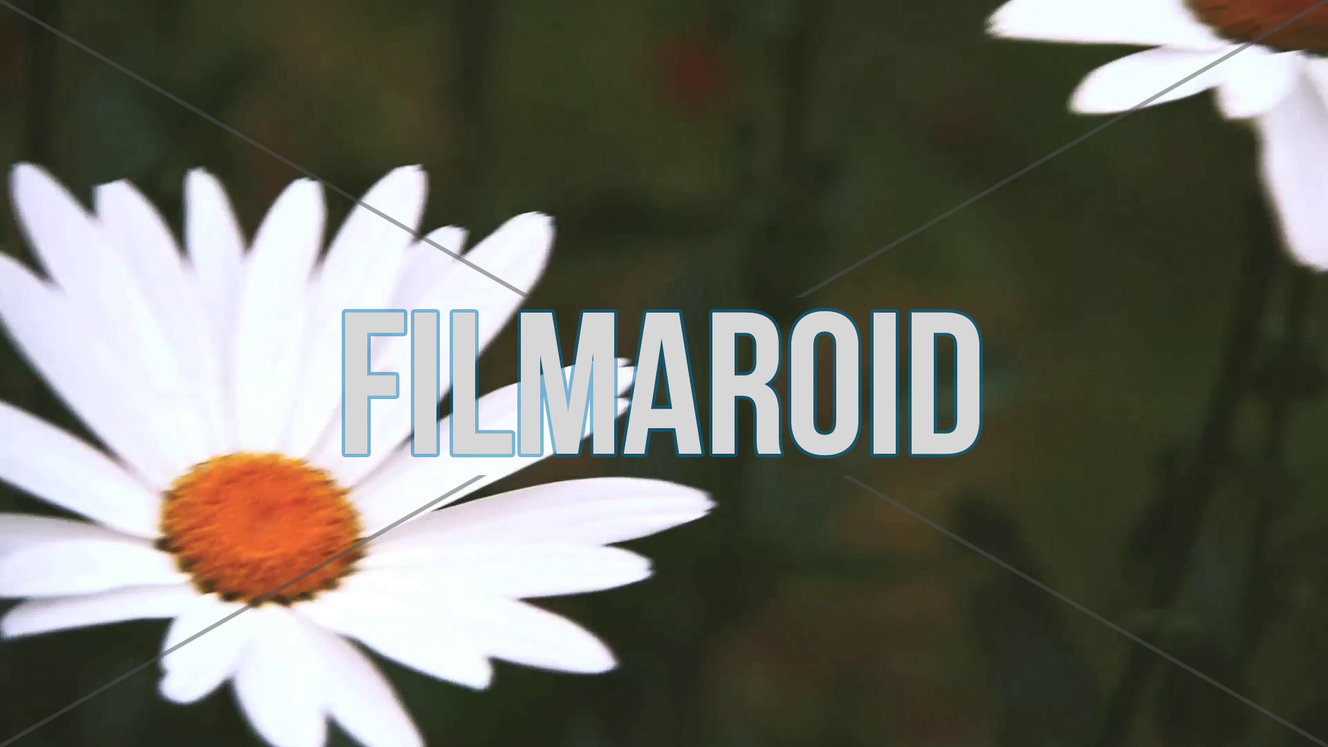 Daisies in the garden - A collection of stock footage about Nature